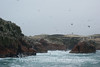 Ballestas Islands - Birds 3