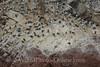 Ballestas Islands - Birds, Guano, & Rock