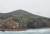 Ballestas Islands - Birds 1