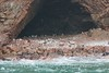 Ballestas Islands - Penguin Hatchery