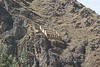 Ollantaytambo Archeology Site - Storehouse 2