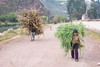 Sacred Valley - Carrying Cane to Market
