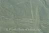 Nazca Lines - Parrot
