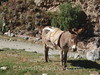 Donkey at Start of the Inca Trail