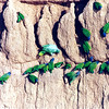 Parrots at a Clay Lick at Manu Biosphere Reserve in Peru