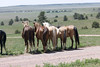 Mustang sanctuary - South Dakota - The girls hanging out