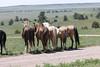 Mustang sanctuary - South Dakota - The girls hanging out