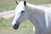 Mustang sanctuary - South Dakota