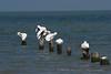 Cranes grooming