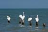 Coastal bird perch