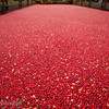 Big Apple Cranberry Bog, celebrating Ocean Spray's 80th Anniversary, Rockefeller Center