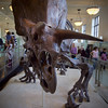 American Museum of Natural History, New York, NY