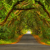 The Road to Padua 4060 w41