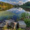 Lily Pond Reflection 6009 w43