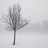 Lone Tree w12