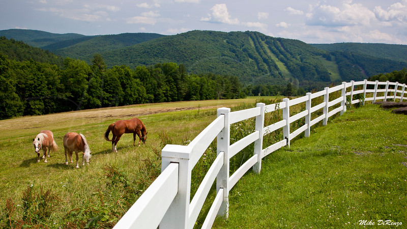 Meadow in the Berkshires 1727 w31