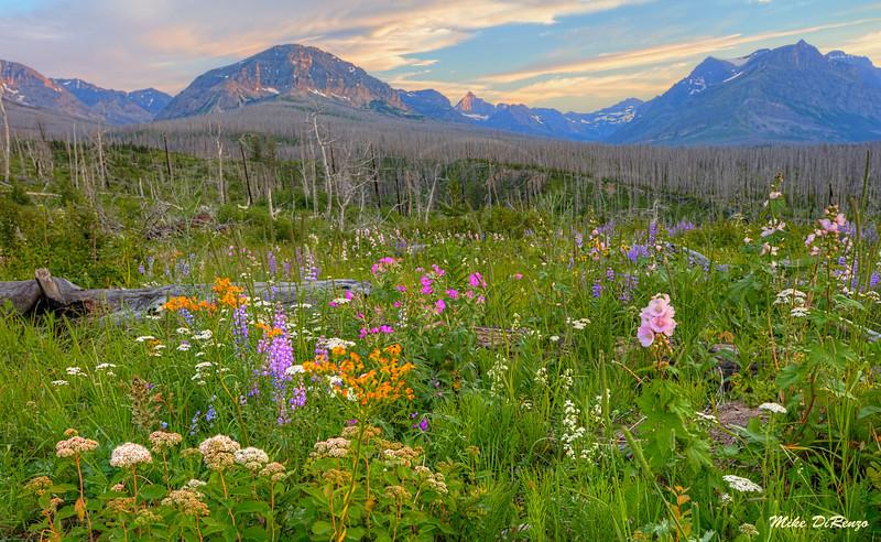 Wildflower Meadow 5786 w51