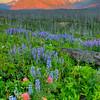 Mountain Morning View 5952 w51