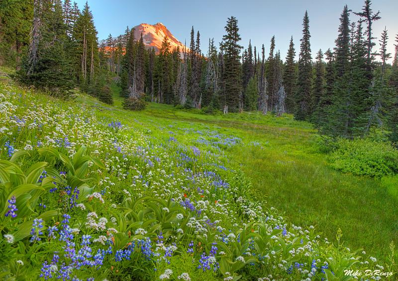 Mt. Hood Meadow 9992 w51