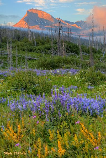 Mountain Meadow 6467 w51
