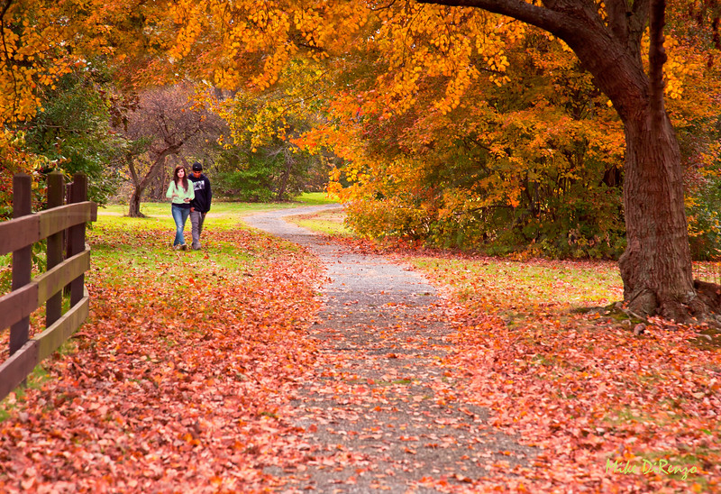 Lovers and Leaves   9393