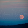 Summer Moon 7261 w51