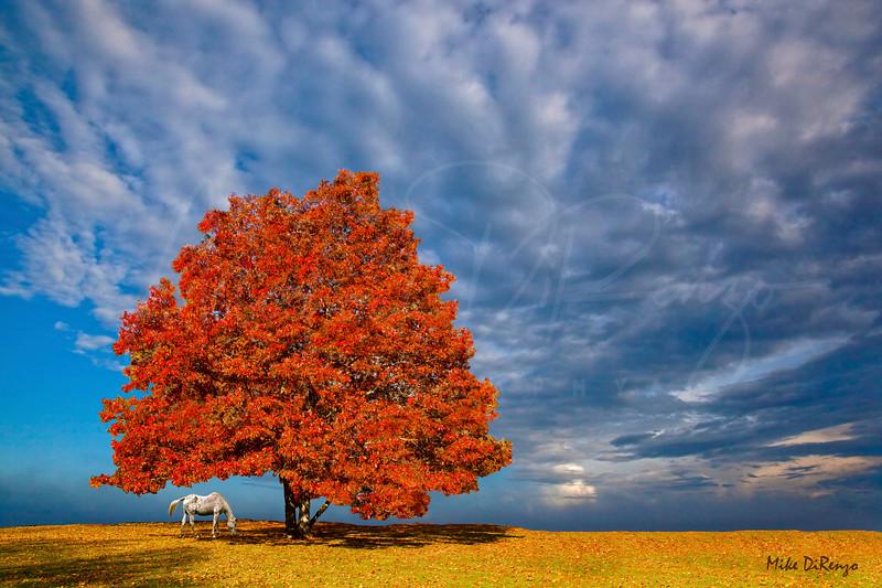 Lone Tree Farm in Autumn  0386