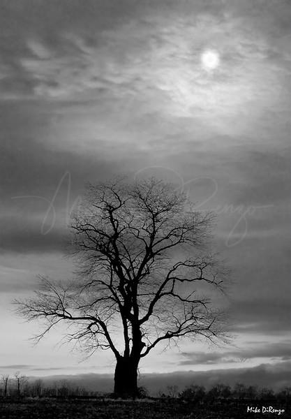 Bare Tree LLoyd Harbor  1110 w12
