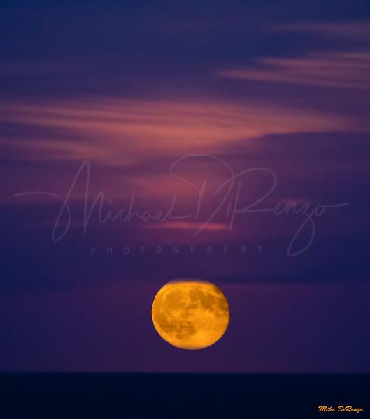 Harvest Moon 9511 w44