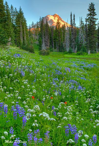 Mountain Meadow 9997 w51