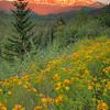Sunset Glow 9882 w51