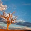 Old Tree  3481  w21