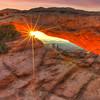 Star of the Desert 3223 w26