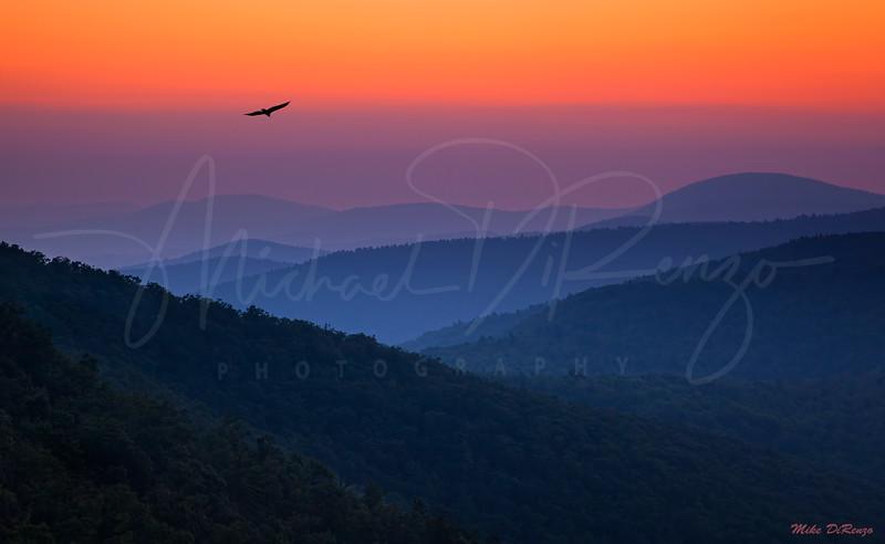 Bluegrass Sunset 1789 w48