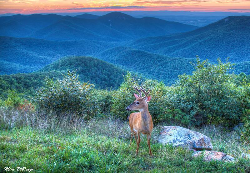 Bambi Photo Bomb  6741 w32