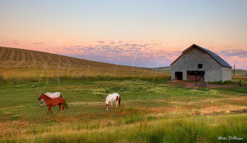 Ranch at Dawn 7081 w51