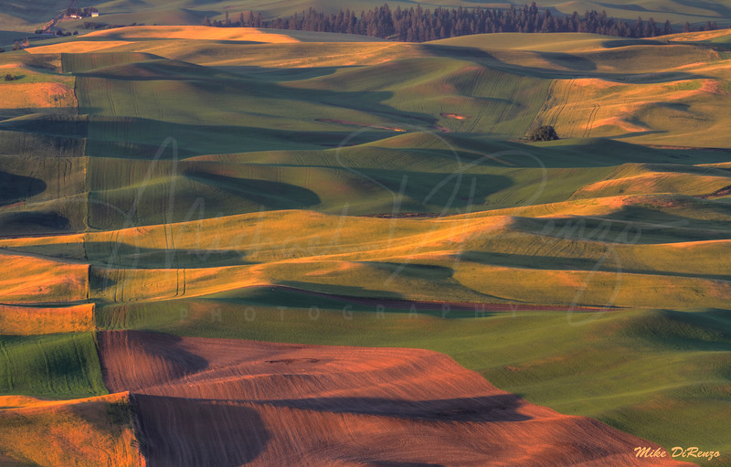 The Palouse 9919 w51