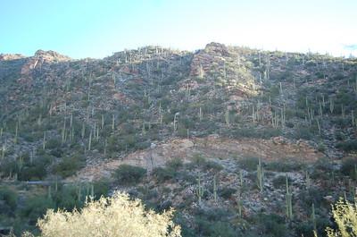 Mount Lemmon Tucson