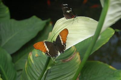 Vicoeria Butterfly Garden