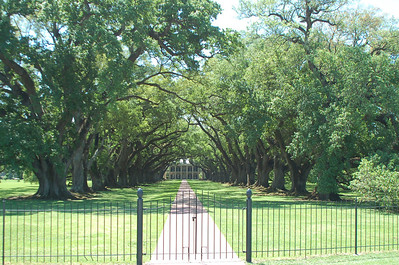 Oak Alley Plantation 2008