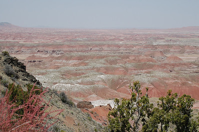 Petrified Forest NP 2008