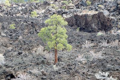 Sunset Crater Volcano  Wupati NM 2010