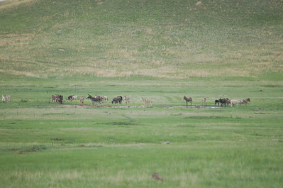 Custer SP 2011