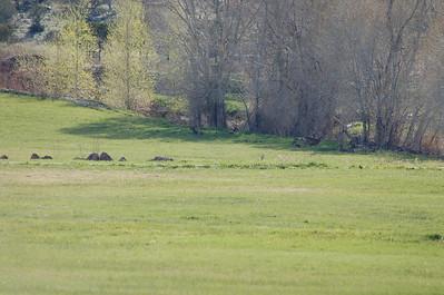 Wildlife Montrose campground