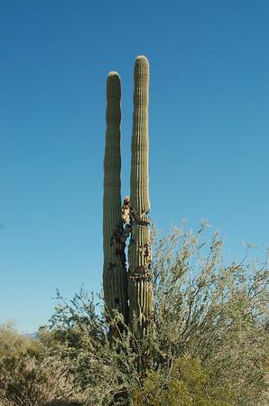 Organpipe Cactus NM