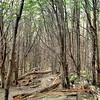 Massif du Paine - Forêt australe