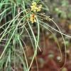 Flore des Galápagos