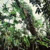 Dans la jungle à proximité de Palenque