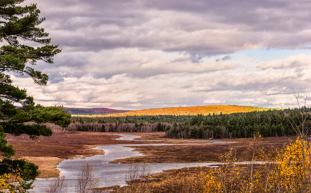 Northeast View Toward  Alligator Lake - Aurora, ME  10/24/16