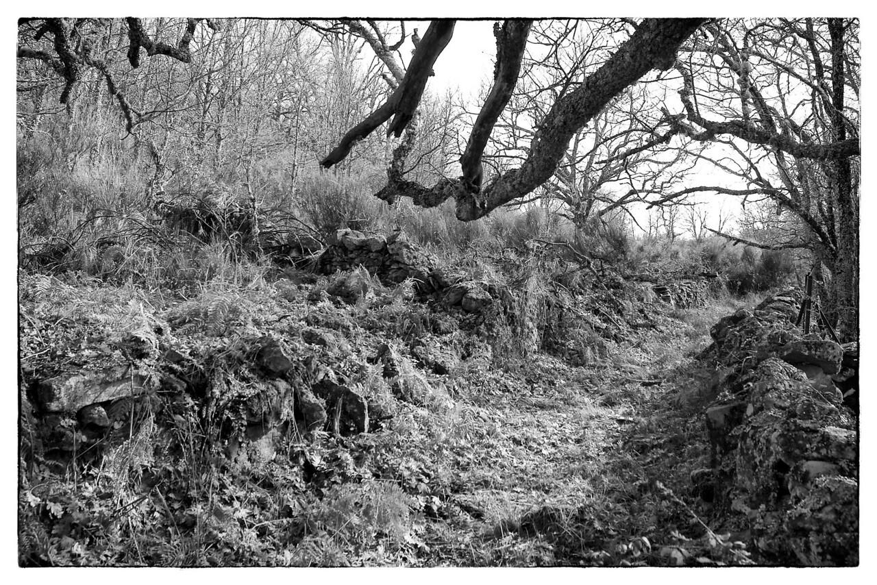 Un camino por el bosque